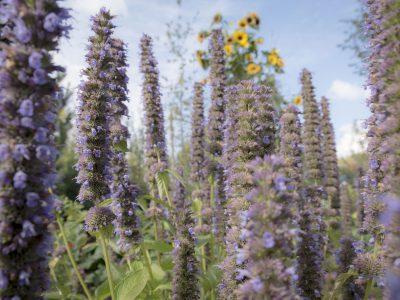 Blumen im Bader Garten
